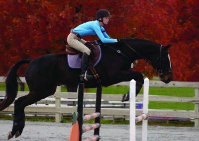 Moxley Waredaca Jumping Horse