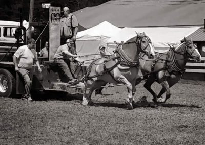 Draft Horse with sled