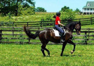 Pasture Brown Horse